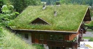Maintenance Green Roof